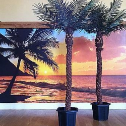 Artificial Palm Tree Hire